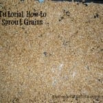How to Sprout Grains (Tutorial)