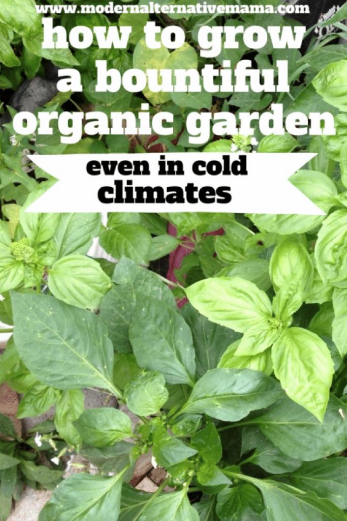 how to grow a bountiful organic garden