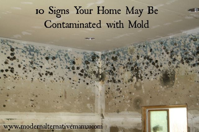 10 signs your home may be contaminated with mold