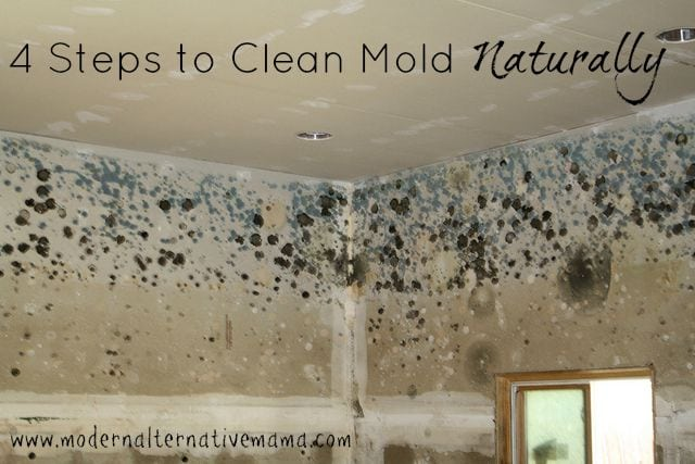 4 Steps to Clean Mold Naturally