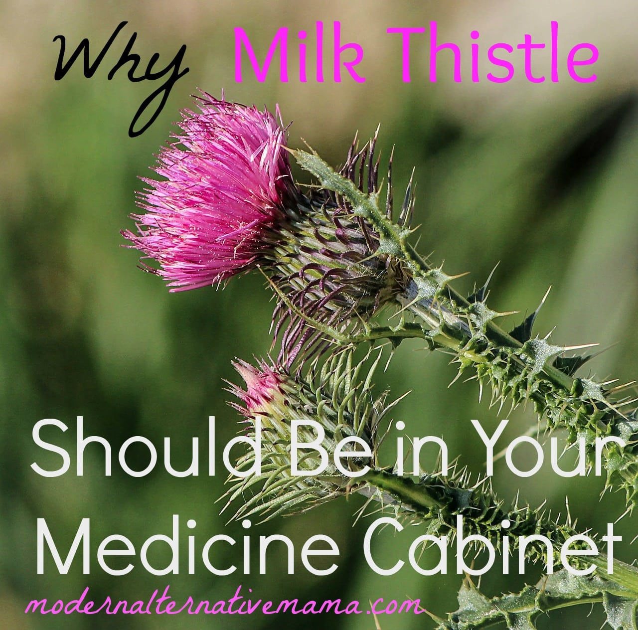 Why Milk Thistle Should Be in Your Medicine Cabinet
