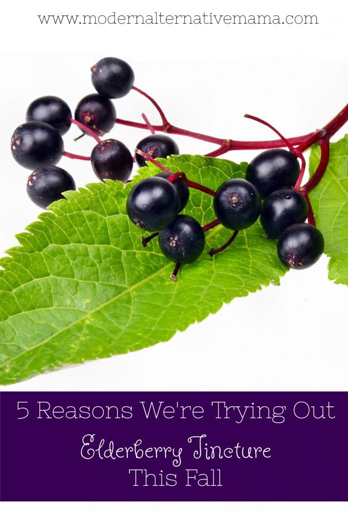 5 reasons we're trying out elderberry tincture