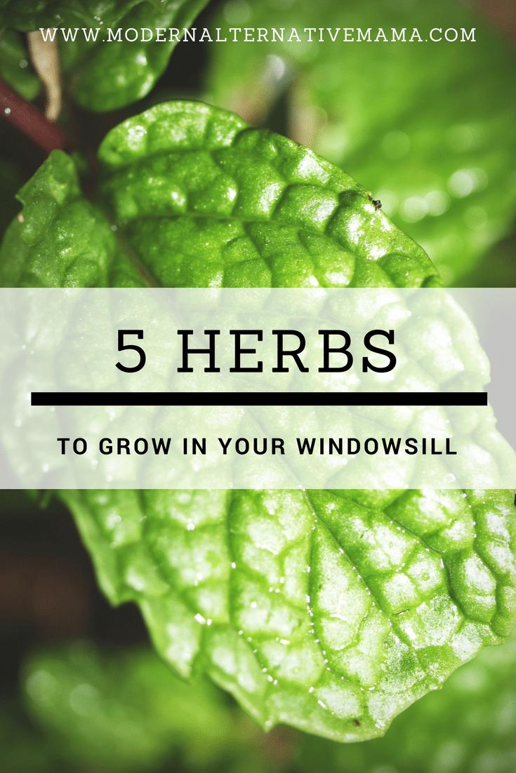 5 herbs to grow in your windowsill