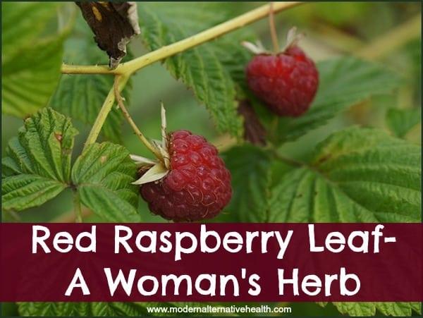 Red Raspberry Leaf- A Woman