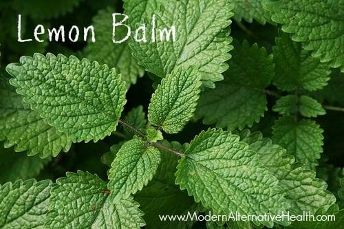 LemonBalm2MAH