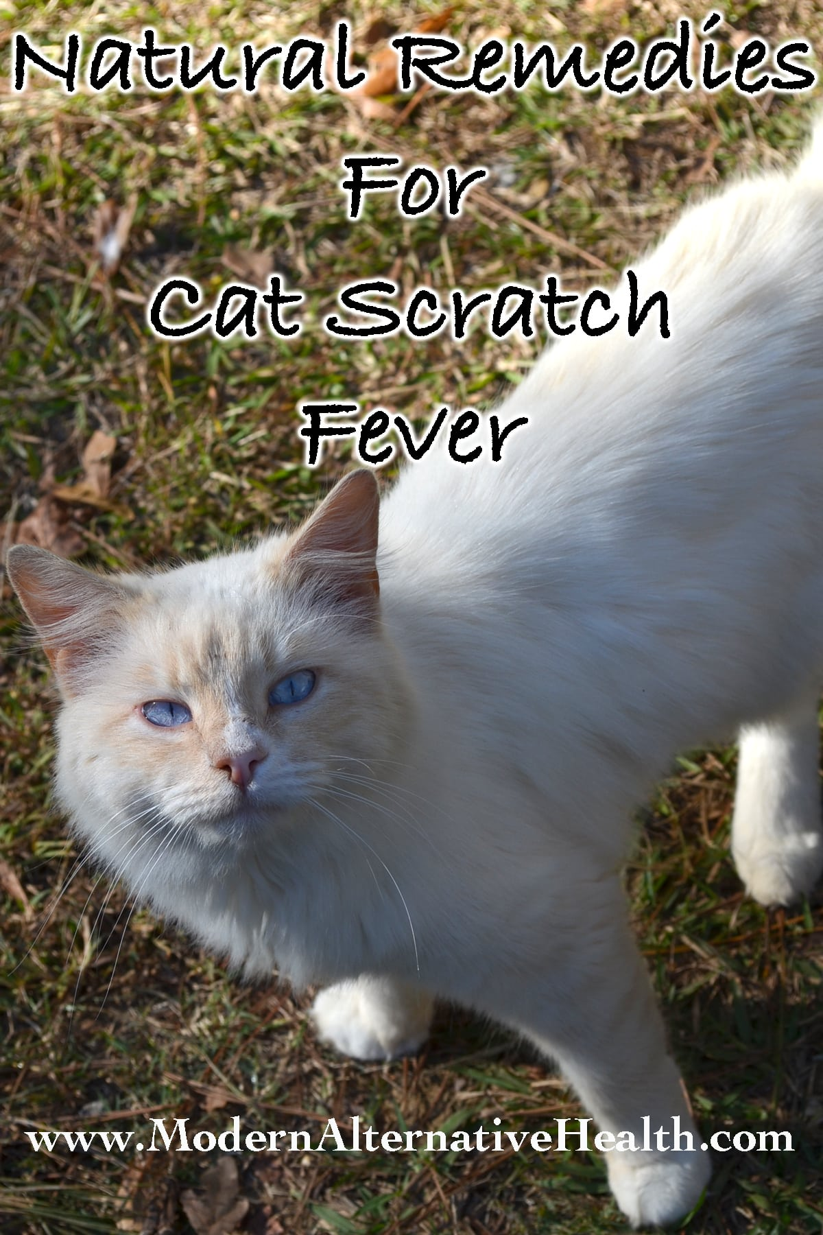 Natural Remedies for Cat Scratch Fever