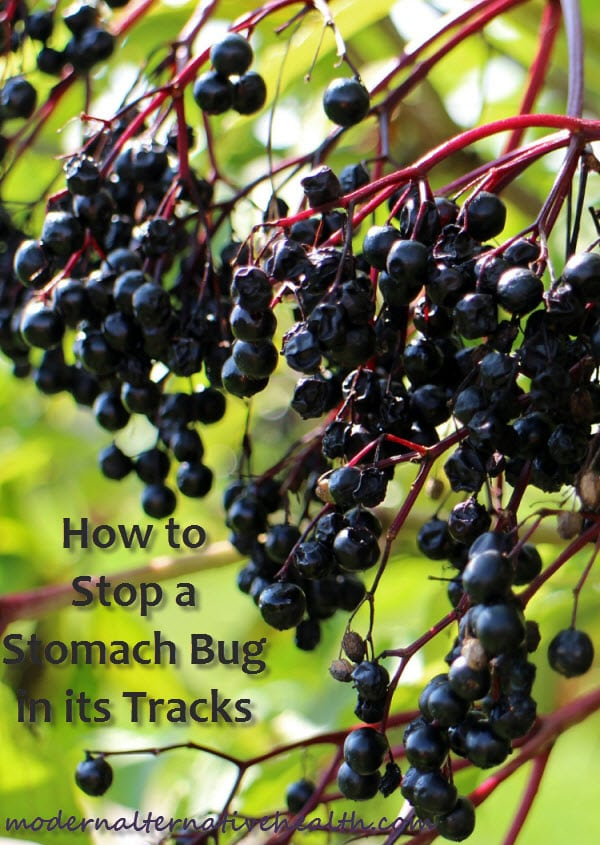 How to Stop a Stomach Bug in its Tracks