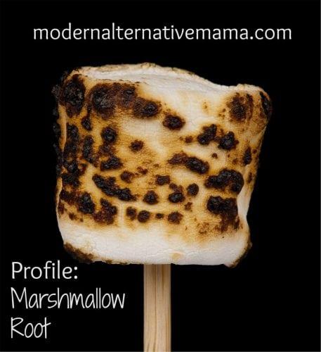 Profile: Marshmallow Root