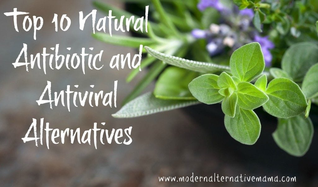 natural antibiotic and antiviral