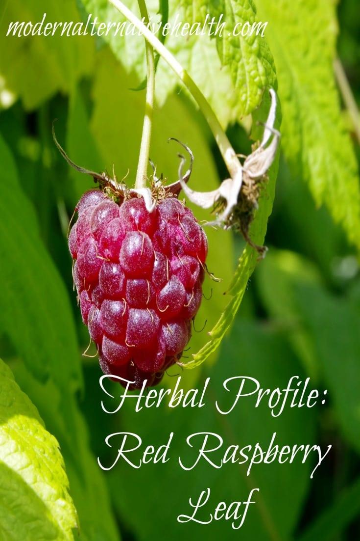 red raspberry leaf http://www.modernalternativemama.com/2016/12/02/herb-profile-red-raspberry-leaf/